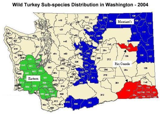 Washington Turkey Hunting